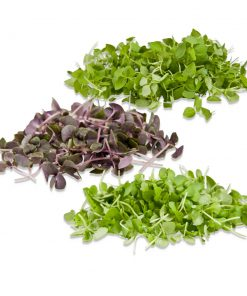 MICROGREEN SAMPLERS Assorted Varieties